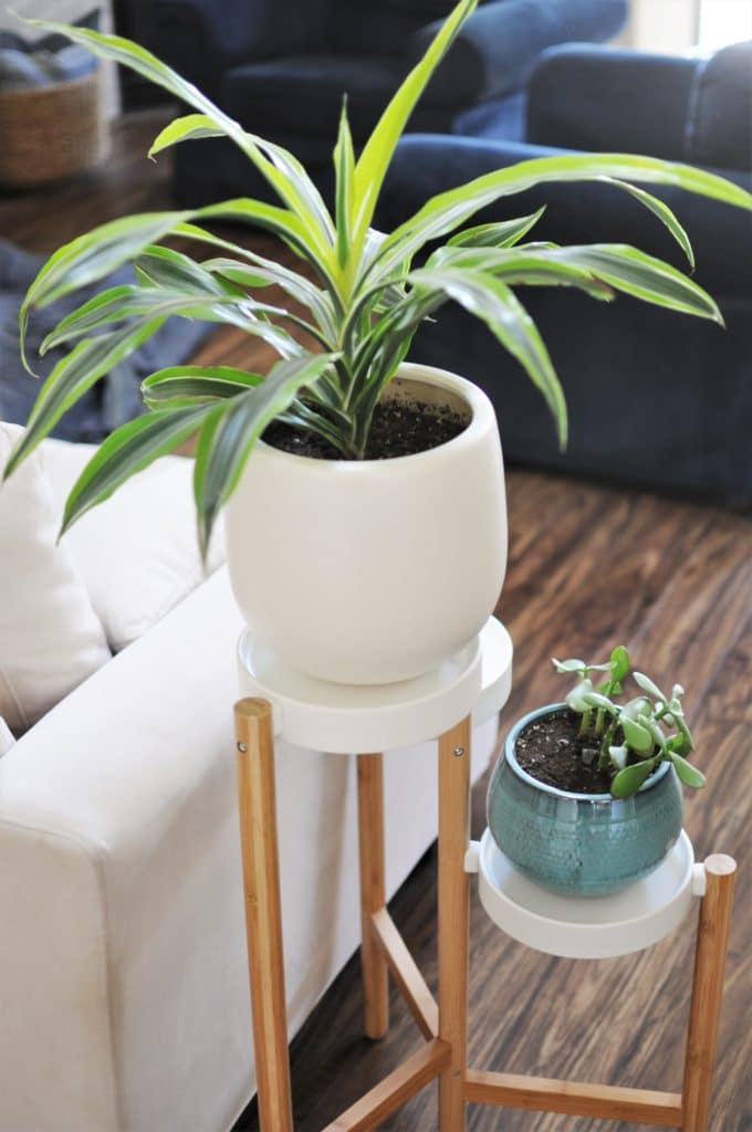 Plants and Couches with Luxury Vinyl
