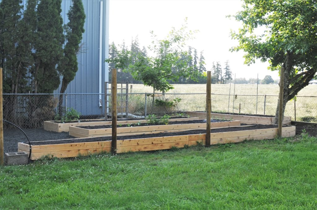 Wide view of the raised garden area with four long raised beds filled with dirt and gravel paths between.