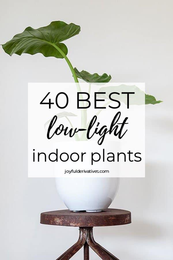 """Large plant in a white pot on a metal stool with text overlay of """"40 best low-light indoor plants"""""""
