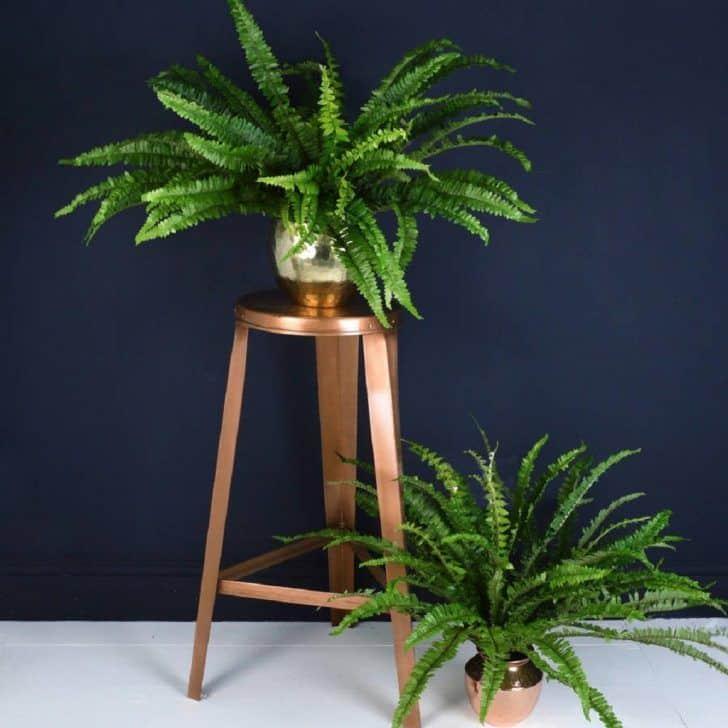 40 Best Indoor Plants That Don T Need Sunlight Joyful