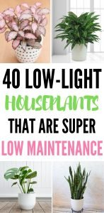 """Long pinterest image with photos of house plants in each corner and text in the middle reads """"40 low-light houseplants that are super low maintenance"""""""