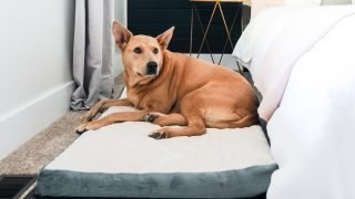 Cheap & Easy DIY Wooden Dog Bed for Any Size Dog